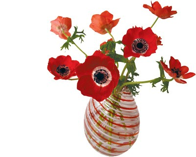 Flat Flower Originale Anemone Rouge