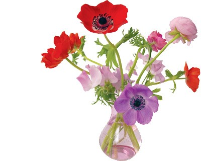 Flat Flower Originale Anemone Rose