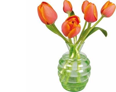 Flat Flower Originale Tulipe