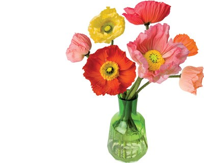 Flat Flower Originale Poppy