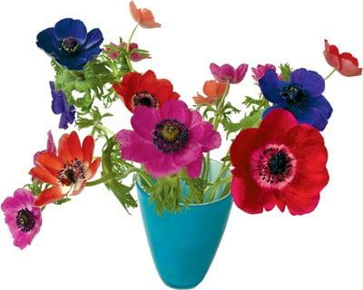 Flat Flower Originale Anemone
